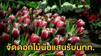 ชวนถ่ายรูปดอกไม้เมืองหนาว งานเทศกาลชมสวน ณ อุทยานหลวงราชพฤกษ์