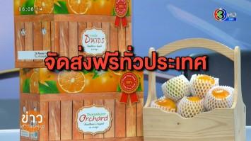 ไทยแลนด์โพสต์มาร์ต ชวนชิม 'ส้มสายน้ำผึ้ง' จากสวนส้มธนาธร ส่งตรงจาก อ.ฝาง จ.เชียงใหม่