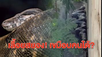 ไขข้อข้องใจ คลิปงูยักษ์ มาจากไหน เลื้อยสยองเขมือบคนได้หรือไม่?