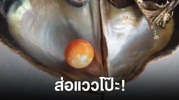 ส่อแววโป๊ะ! หนุ่มพบไข่มุกเมโล 10 ล้าน กูรูวิเคราะห์ของจริงหรือไม่ ล่าสุดโผล่อีก